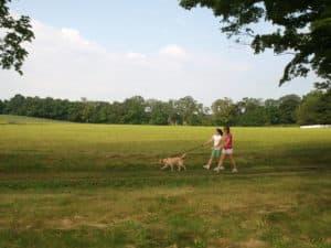 App - trail dog field