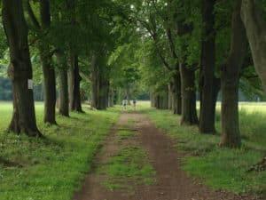 App -tree row