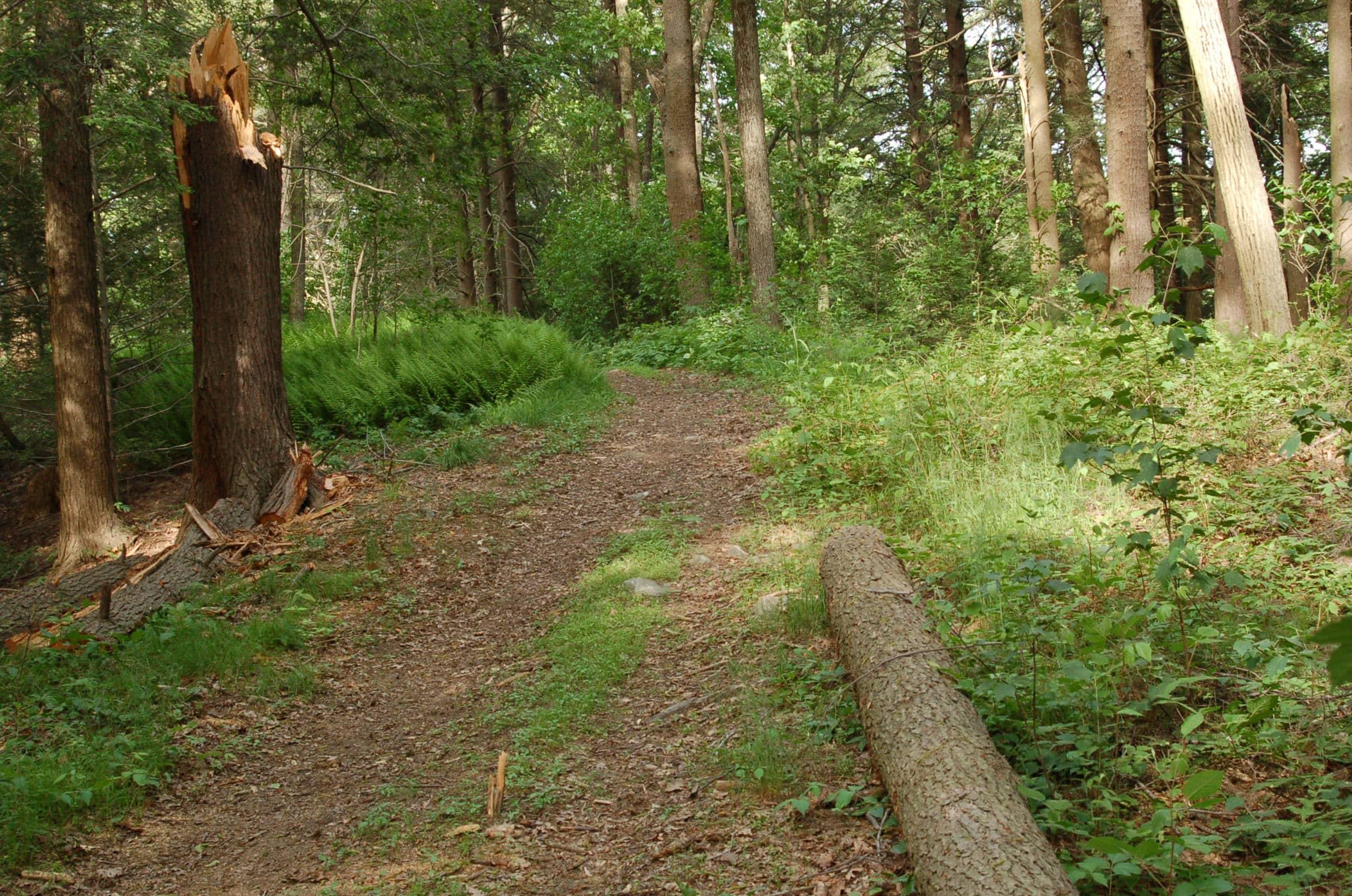 Harvard Forest Essex County Trail Association