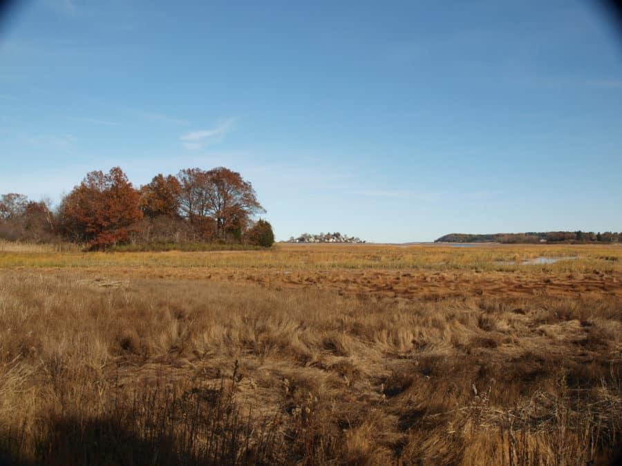 GWF Salt Marsh