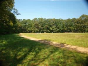 Jbird field