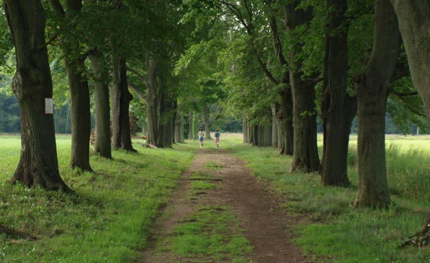 Appleton Farms Grass Rides