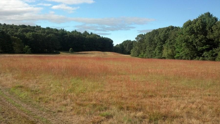 Bradley Palmer field