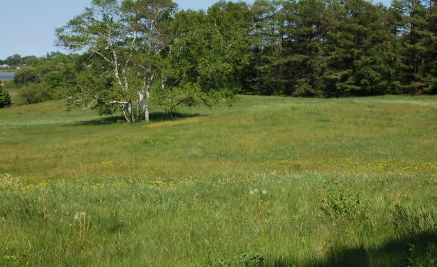 Nichols Field