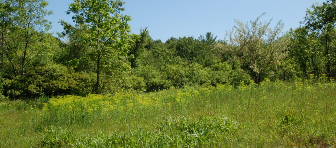 Ordway Reservation Field