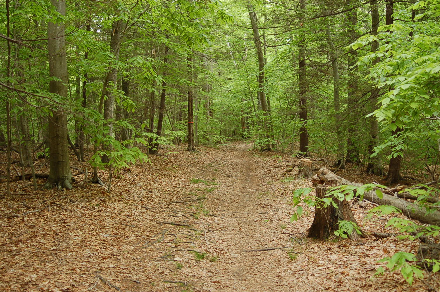 Side By Side Atv >> Chebacco Woods – Essex County Trail Association