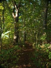 Hamlin Woods