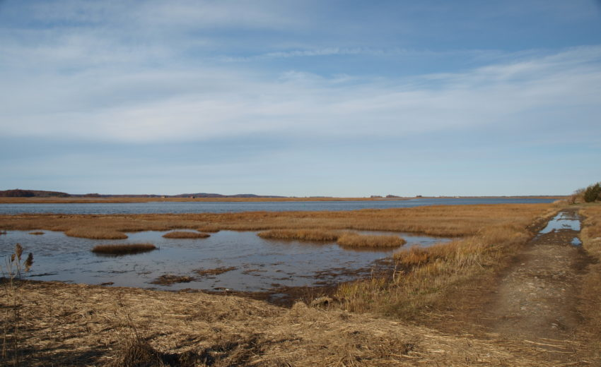 Strawberry Hill Marsh