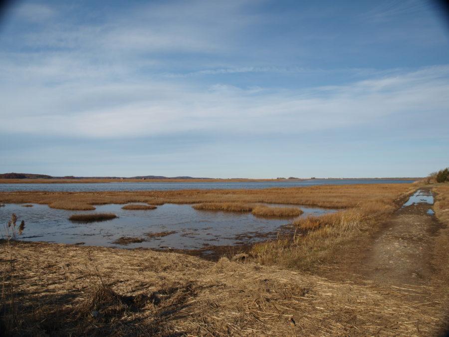 Straw hill marsh
